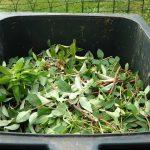 green-waste